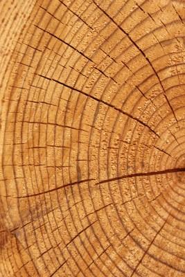 Struktura stěny dřevostavby
